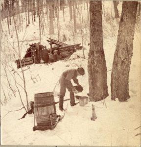 Photo de la récolte de l'eau d'érable vers 1880.