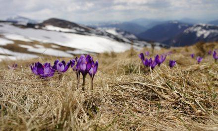 Le printemps – vidéopoème