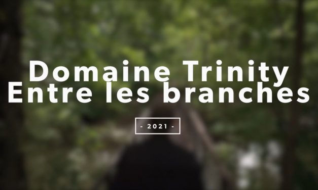 Domaine Trinity: Entre les branches
